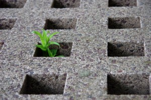Plant_growing_through_hole_in_cement
