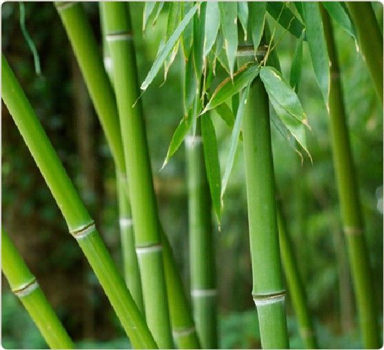 A Lesson In Persistence From the Bamboo Tree